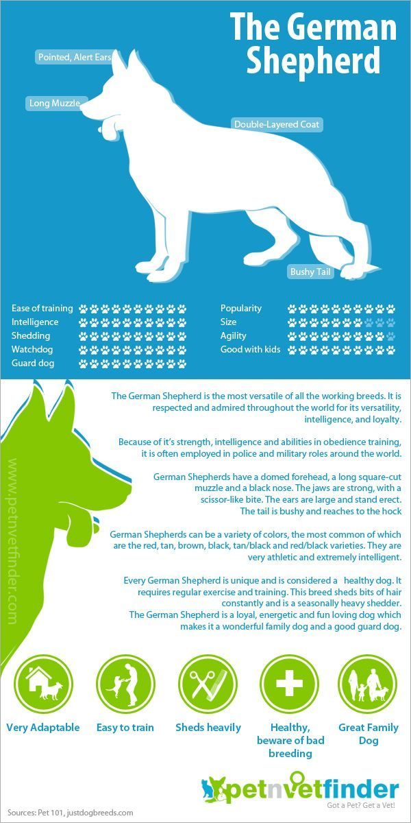 German Shepherd Infographic They Shed Like Crazy But This Is
