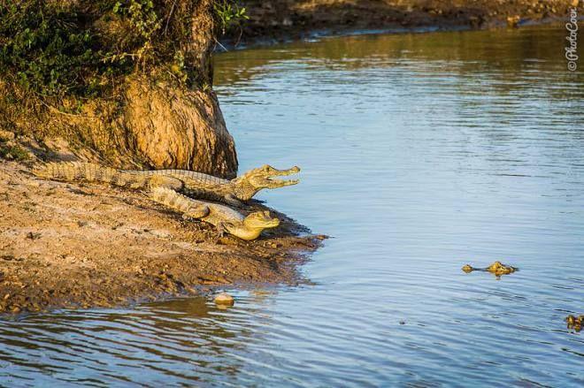Wildlife in Los Llanos, Colombia (©photocoen)