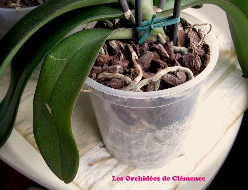 25+ best ideas about soin orchidée op pinterest - une orchidée