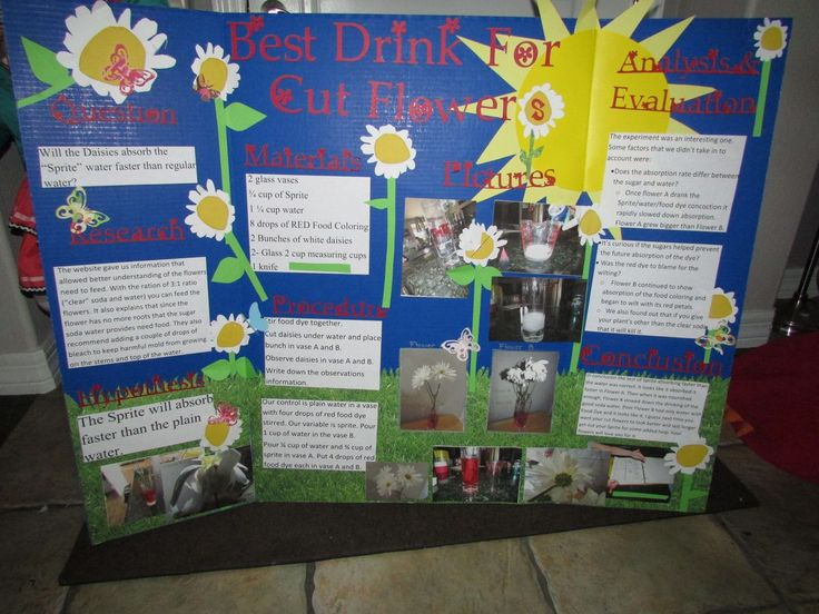15 best tri fold poster board ideas images on pinterest for Creative poster board ideas