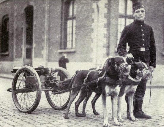 Belgian dogs trained to draw quick-firing guns - Belgian Armed Forces - Wikipedia, the free encyclopedia