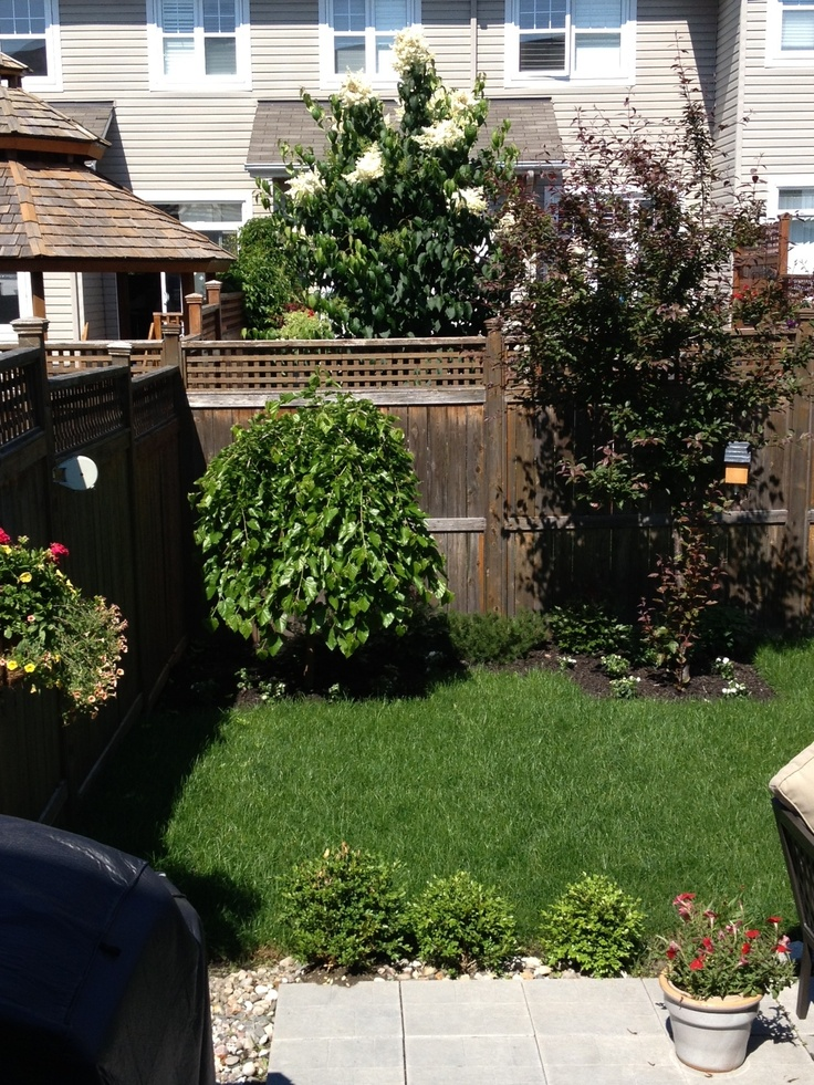 "By Jonah, age 9. ""This is Our back yard that we did all new grass and planted bushes and flowers around our trees."""