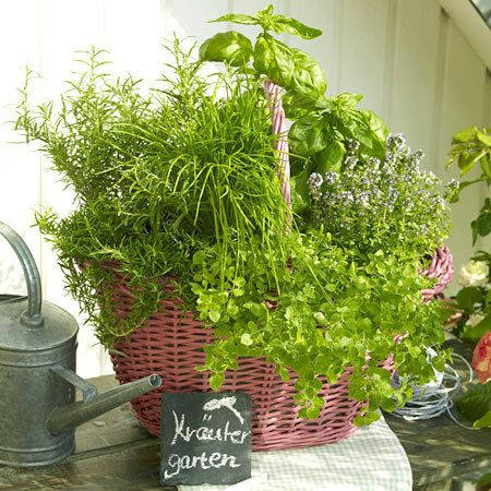 Lovely, herbs in a basket. Nice gift too! (Mothers day???)