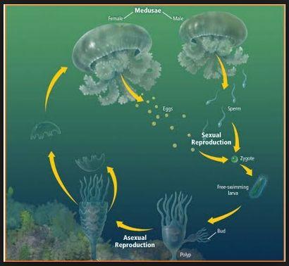 Belajar Biologi Online: Metagenesis