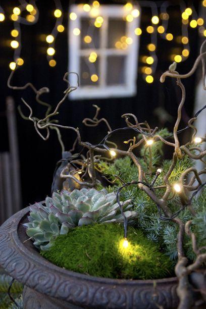 Gør haven hyggelig til jul - Fru Pedersens have #frupedersenshave