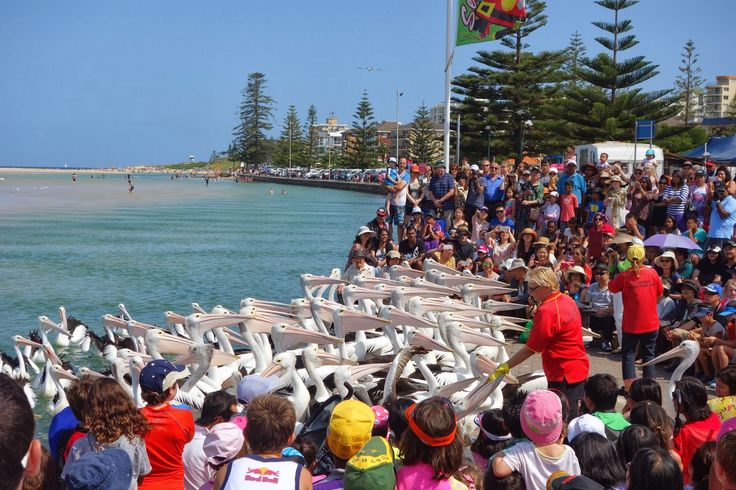 Feeding time at The Entrance on the Central Coast of NSW     - Google Search