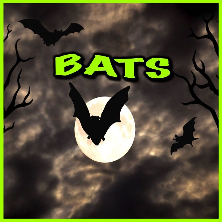 Bats PowerPoint and Activities: Learn all about bats in this PPT presentation. This nonfiction resource about the nocturnal creatures is full of information, photos, illustrations, videos, audio clips, and fun facts. by Nygren Resources (photo by Stux @ https://pixabay.com/en/halloween-gloomy-full-moon-tree-1001676/ )
