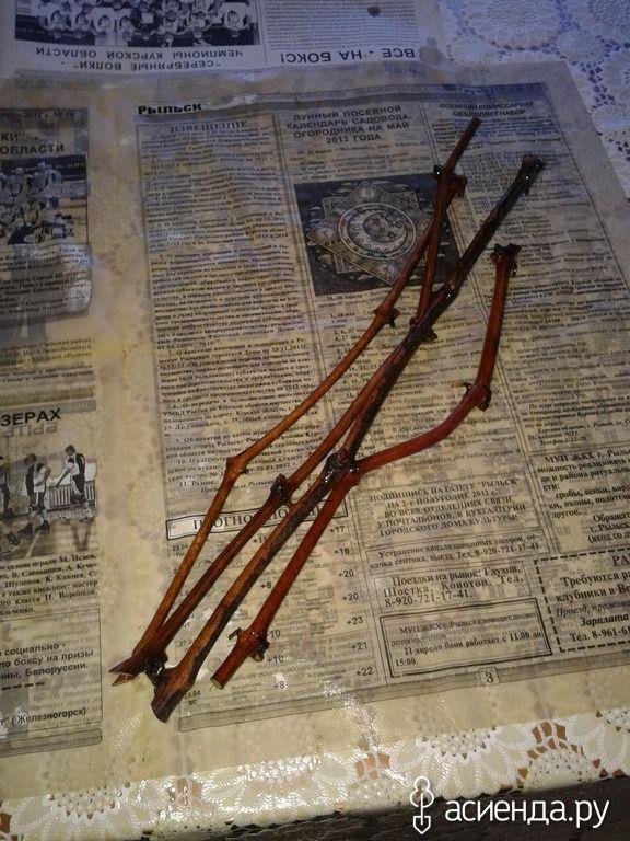 проращивание черенков в газете