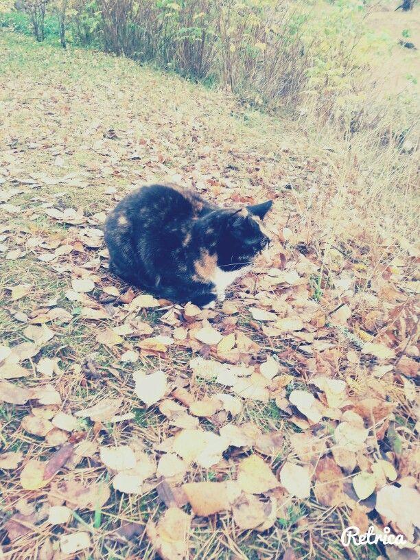 Cats autumn:)
