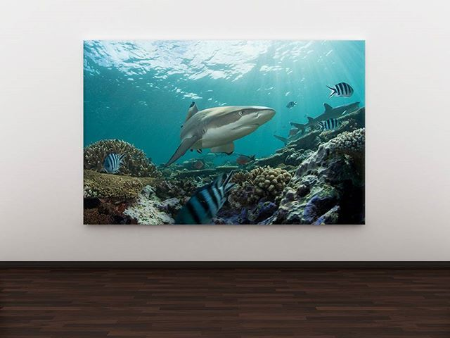 The king of the sea.  Code: P000028 Phone: +628118439998 (WA/SMS) Email: sales@canvasdeco.com Website: www.canvasdeco.com Price: Ask by request. . #canvasprinting #canvaspainting #cetakkanvas #cetakkanvas #cetakkanvasjakarta #cetakkanvasphoto #cetakkanvasmurah #lukisan #kanvasprint #canvascustom #hiasandinding #dekorasidinding #walldeco #spanram  #canvasframe#kanvas #canvasposter #printcanvas #walldecoration #vintageposter #canvaspaintings #posterkanvas #printkanvasmurah #walldecor…