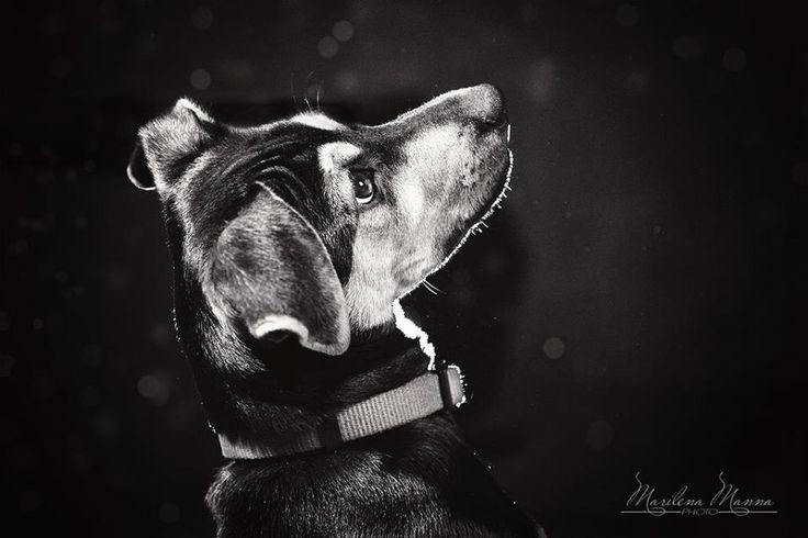 Nessuno come un cane sa apprezzare la straordinarietà della tua conversazione. Christopher Morley #cane #fotocane #fotocani #amicodelluomo