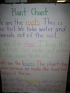 Buggy for Second Grade: Plant Life Cycle