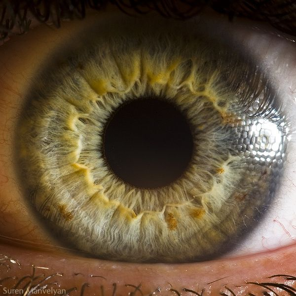 Hazel Eye: The Alien Landscapes of the Human Eye in Macro - Photo by: Suren Manvelyan
