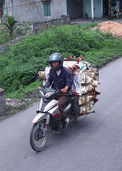 Vietnam - Poulets élevés au grand air!