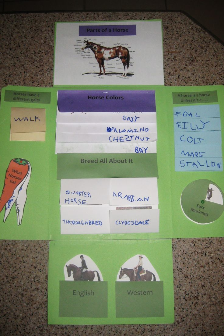 All About Horses  was the first lapbook that Noah and I ever did - and the first template that I made. This year, I'll be redoing it...