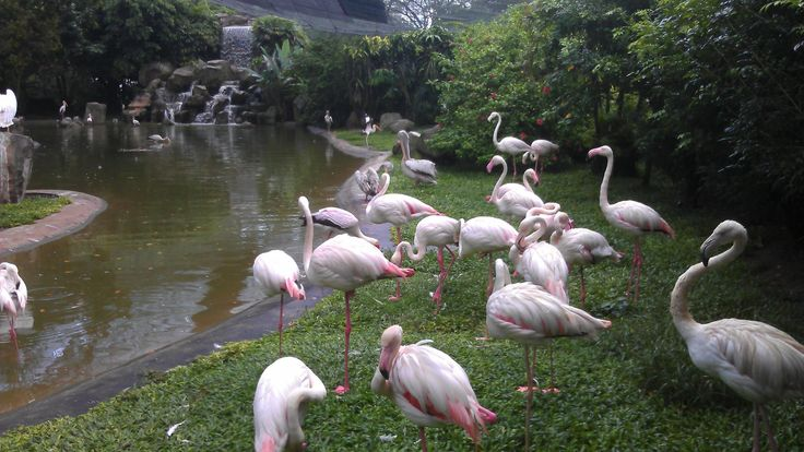 Kuala Lumpur Bird Park is a 20.9-acre public aviary that has been in limelight for its picturesque setting and innovative design. The park sees 200,000 visitors every year and has become a very hot tourist spot. http://vacationandtripplanning.blogspot.com/2015/10/here-come-awesome-ideas-for-places-to.html