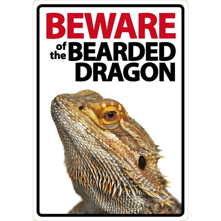 Image result for bearded dragon global warming