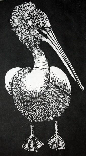 Pelican linocut by rowanne anderson http