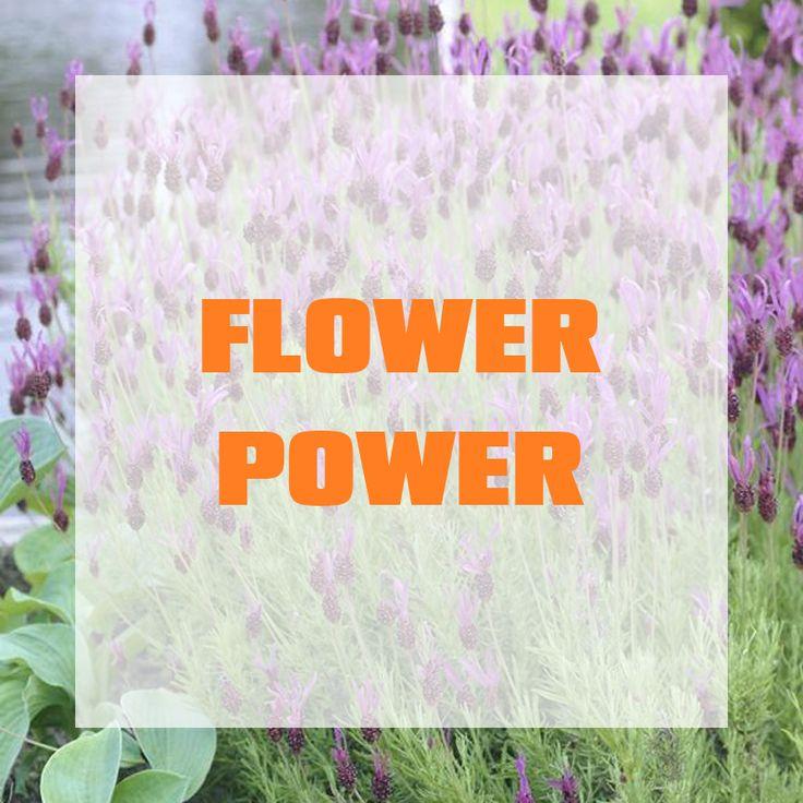 Flower Power By OBI Auf Dieser Pinnwand Kannst Du Dich Ber Die Neusten Trendpflanzen Und Seltene