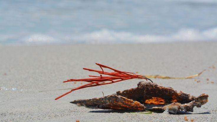 Pinellas County Open Data Portal Upholds Florida Sunshine Laws – 21CenturyState