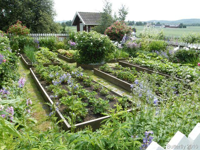 Raised bed Kitchen vegetable garden | jardin potager | bauerngarten | köksträdgård