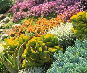 Precious resources is a garden trend where necessity meets innovation to protect and conserve resources. In an era of increased environmental awareness, more people are looking to save water. Here's a guide to creating a water-wise landscape.