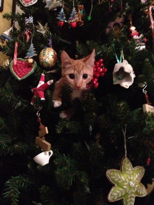 chats-arbres-noel-09