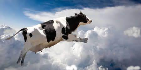 """A tua vaca vai durar para sempre?  Seguramente que está """"vaca"""" é a culpada pelos momentos difíceis que atravessamos hoje em dia. Nem imaginas a influência negativa que a tua """"vaca"""" tem sobre ti.  http://blog.nunoprates.com.pt/blog/a-tua-vaca-vai-durar-para-sempre https://www.facebook.com/nuno.prates.16"""