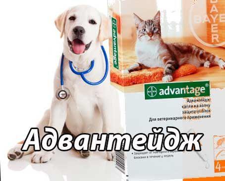 advantage, адвантейдж, адвантейдж для кошек, адвантейдж для собак, адвантейдж инструкция, капли адвантейдж, имидаклоприд инструкция по применению, препарат имидаклоприд
