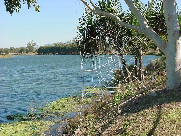 River Web