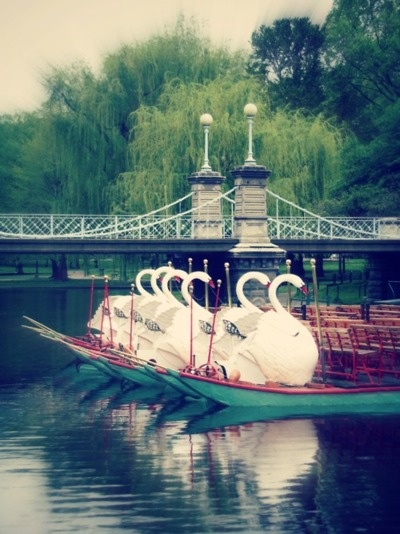 Love to go to Boston!  And Cambridge, Mass. where the smartest people in the country live!  Swan Boats in the Boston Public Garden