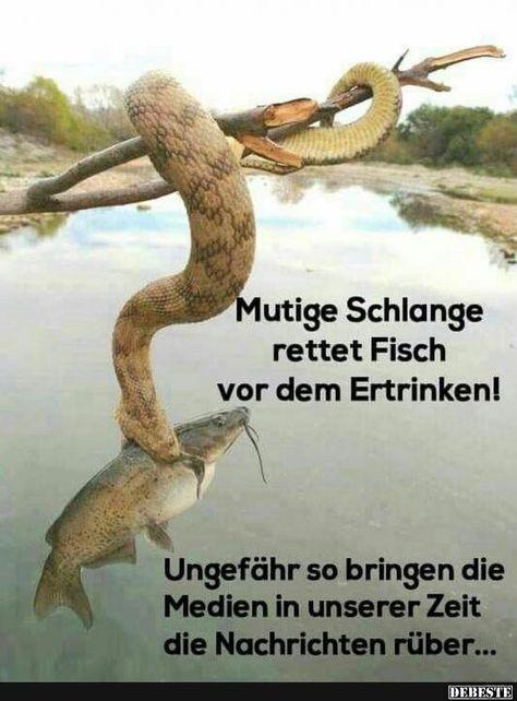 Mutige Schlange rettet Fisch vor dem Ertrinken!   Lustige Bilder, Sprüche, Witze, echt lustig
