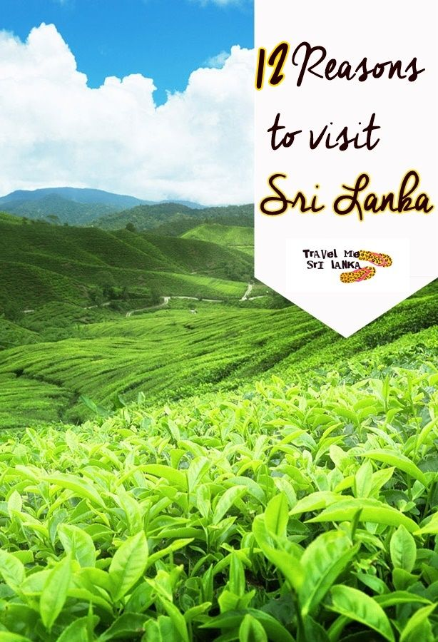 Find out 12 reasons to visit Sri Lanka.Are you a person who willing to travel another country and ended up with a list of countries in your mind and struggling to select a one?  Then this post is all of you out there, searching  Google to know more about Sri Lanka(which is in your list).   If you are not a one with such a list, in this post I'll show you,why you must add Sri Lanka to your travel bucket list.