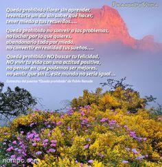 Queda prohibido no buscar la felicidad, poema de aliento, optimismo, energía y amor