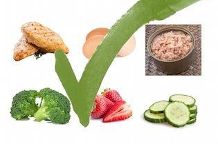 Saiba como fazer a dieta do metabolismo rápido