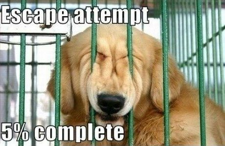 25 funny dog memes that feature a picture of a pooch and a funny caption written by a human.