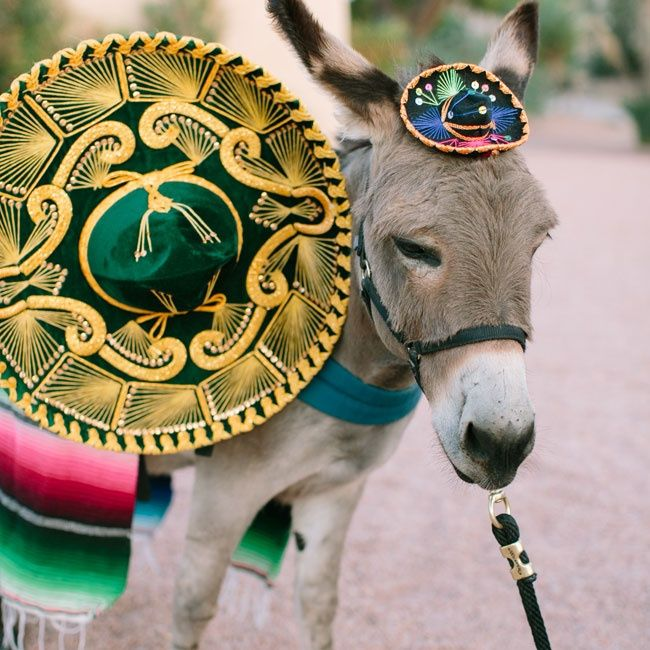 A donkey for delivering beers at cocktail hour is a genius idea for a Southwest-inspired wedding! Photo: Vienna Glenn Photography