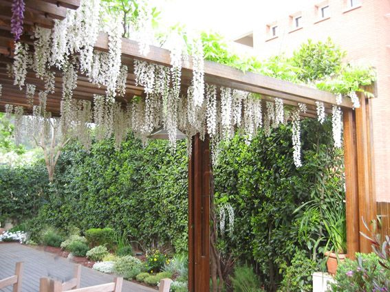 17 best images about p rgolas cenadores y porches - Pergolas para jardin ...