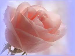 Rosa salmón claro