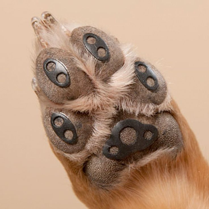 Paw Pads For Dogs Veterinarians And Boots