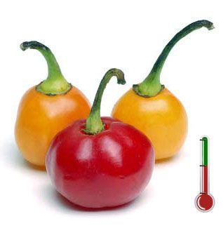 Pimentas Art | Bode Vermelha - 40 Sementes de Pimenta Bode Vermelha *Frete Grátis*