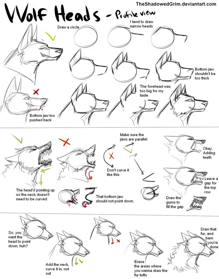 TheShadowedGrim - How he/she draws wolf heads
