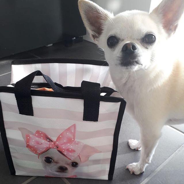 Chihuahua Coats Peruvian Dog Jumpers Dog Accessories My Chi
