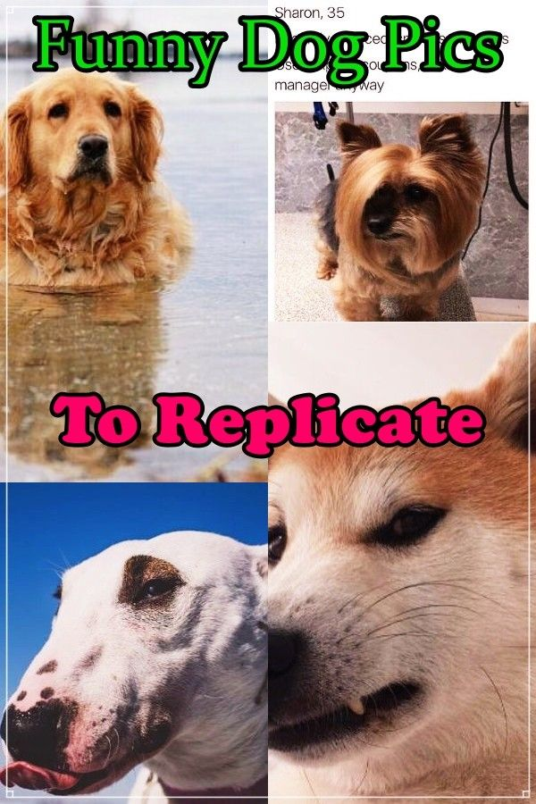 Learn About Dog Care With This Article Trasedogs In 2020 Dog Care Dogs Funny Dog Pictures