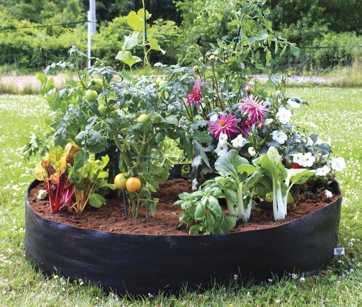 Learn about two new types of gardening: container gardening and raised bed gardening! These methods are great if your outdoor space is limited.