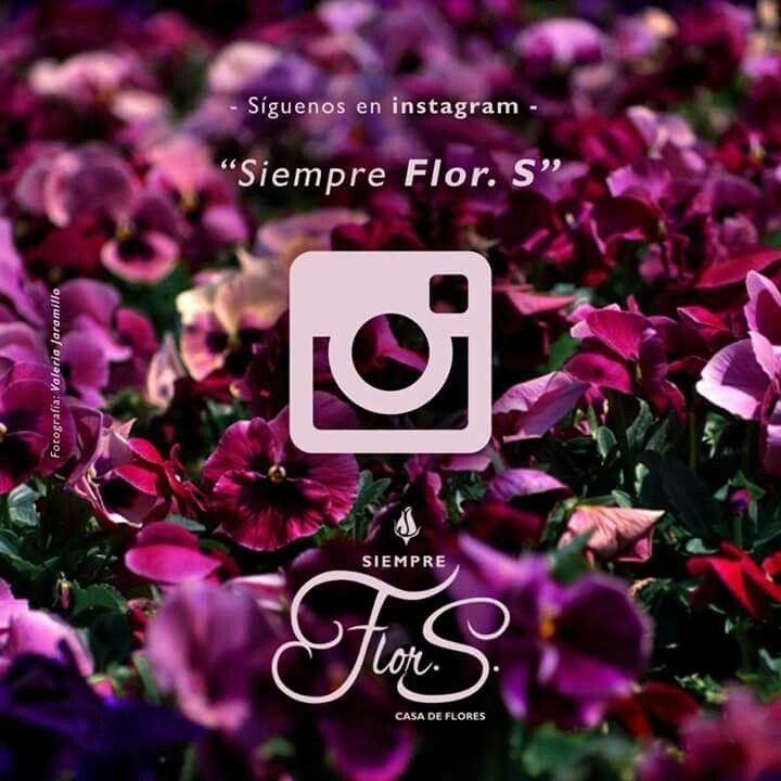 Siempre Flor. S. en #instagram
