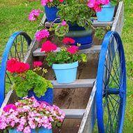 bahçe düzenleme — Yandex.Görsel – Bahçe çiçekleri ve isimleri begonya bahçe çiçeği kana bahçe.