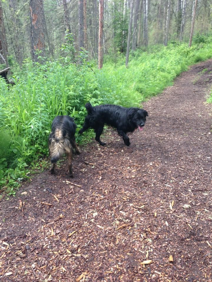 Judith Louise IwaszkiwFort Mcmurray lost Cats & Dogs June 26 via mobile   Found in trails kegan and taco. If you know them MSG me