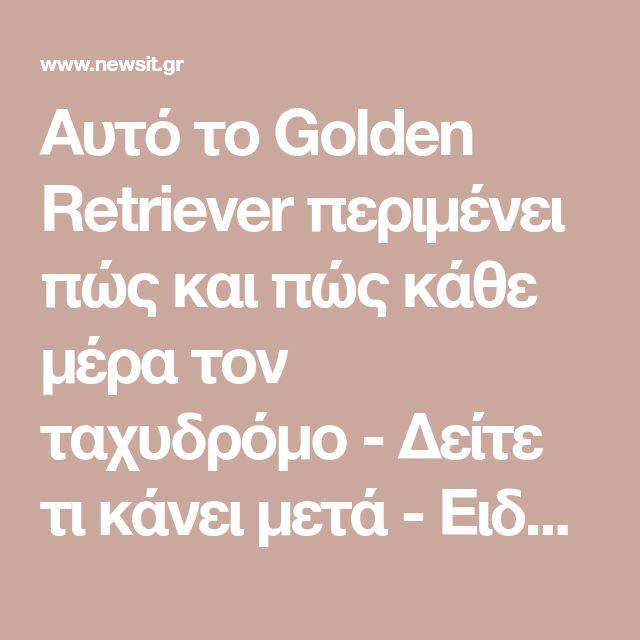 Αυτό το Golden Retriever περιμένει πώς και πώς κάθε μέρα τον ταχυδρόμο - Δείτε τι κάνει μετά - Ειδήσεις Newsit.gr