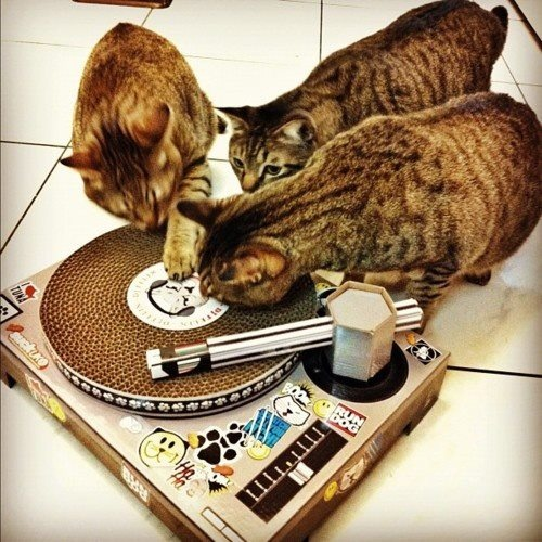 17 Best images about Turntable on Pinterest | Dj party ...